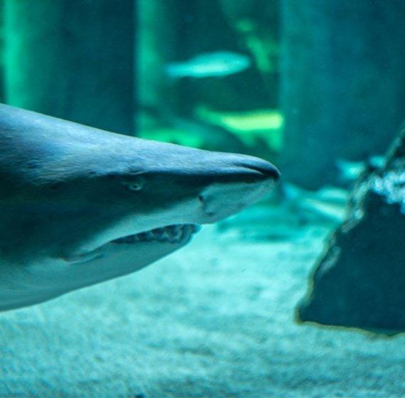 L'aquarium de Cattolica